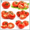 Extract Of Lycopene