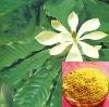 Magnolia officinalis P.E. Magnolol 90%