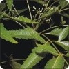 Neem pesticides