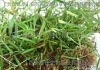 Tea polyphenols plant extract ,Superior quality