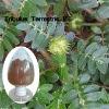 Tribulus extract(Gokhru)