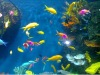 Water Treatment Material Polycaprolactone for Aquarium