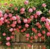 flower chemical fertilizer
