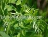 plant extract Oxymatrine 98%-102%